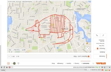 Nine-banded armadillo – Strava art by Stephen Lund Victoria BC garmin gps strava art cycling bicycle cyclist