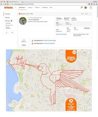 Anna's Hummingbird by GPS artist Stephen Lund in Victoria, BC, Canada GPS Garmin Strava art cyclist cycling creativity animals birds Anna's Hummingbird Calypte anna